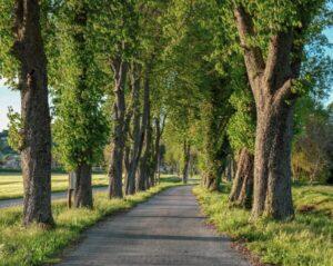 Read more about the article Come percorrere la Pista ciclabile Treviso Ostiglia